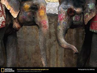 Elephant Precut Coloured l atelier de mme reddick s workshop divali elephants