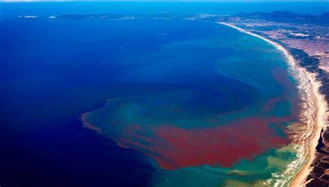 imagenes de mareas rojas las mareas rojas curiosidad gastron 243 mica