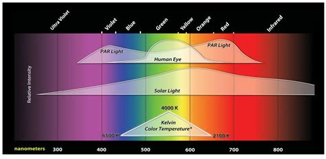 t5 grow bulb spectral chart t5 grow lights questions fr 233 quentes aquaponie aquaponie