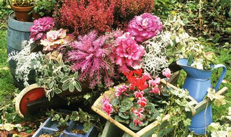 garden flowers all year alan titchmarsh s tips on all year planting garden