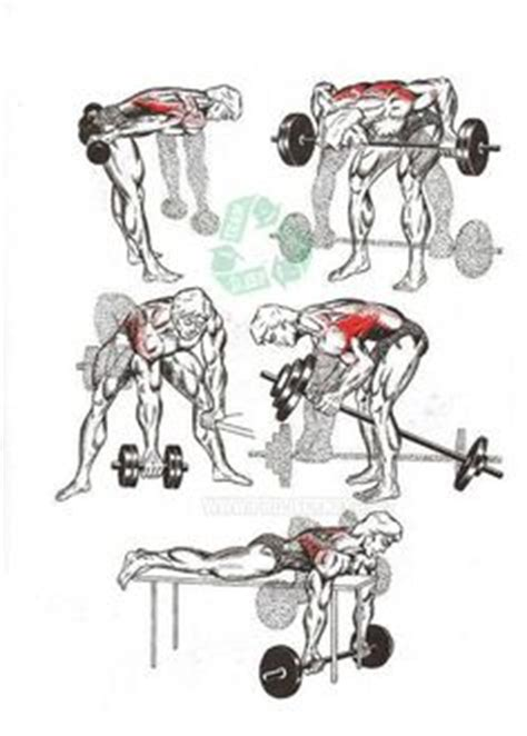 1000 ideas about lat workout on back