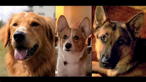 dogs purpose a s purpose a new all about a rather one as many dogs