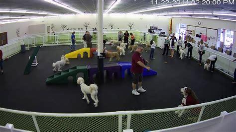 doodlebug club doodles daycare jacksonvillefl happy hound resorts