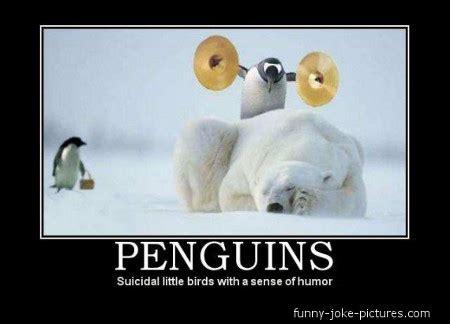 Funny Penguin Memes - penguin meme funny joke pictures