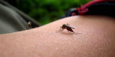 membuat cerpen yang pernah di alami tips membuat minyak pengusir nyamuk dari bahan rumahan