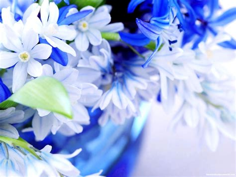 Beautiful Flower Background For Powerpoint Beautiful Flowers Backgrounds For Powerpoint Flower Ppt