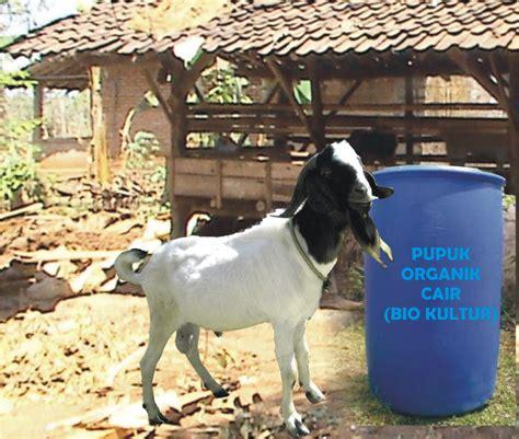 Em4 Sebagai Pupuk Cair membuat pupuk organik dari kotoran kambing contoh artikel