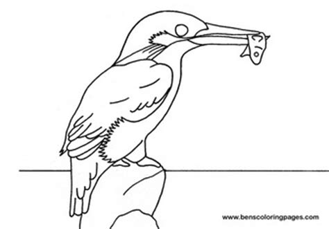 kingfisher coloring pages kingfisher bird outline