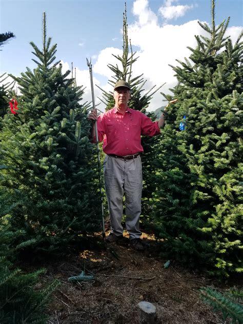 cartner christmas tree farm