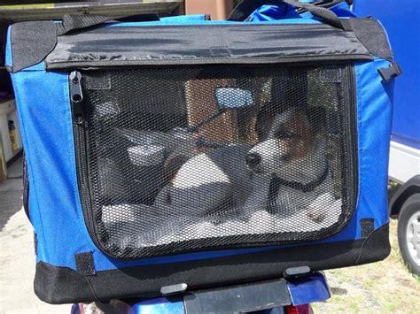 Motorrad Transport Vorrichtung by Grossrollerfreunde Saar De Thema Anzeigen Hund Auf Roller