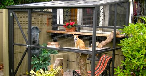 cat safe  happy  catio spaces home
