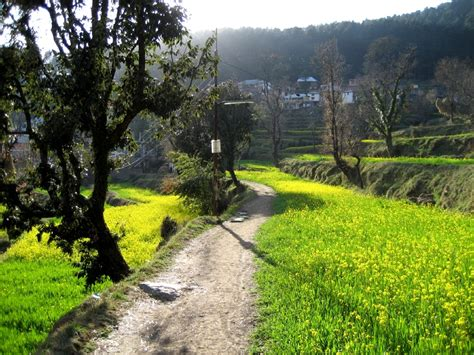 Cottage Looking Houses Dharamkot Himachal Pradesh Wikipedia