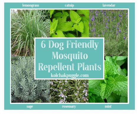 best mosquito repellent for backyard dog friendly decks natural dog safe mosquito control