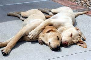 Spooning In Bed Two Dogs In Love The Best Dog Blog By Dogpacer