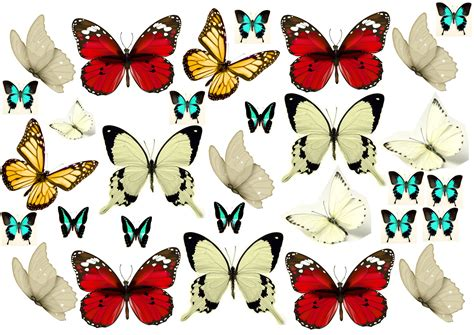 Edible Cake Decorations by Edible Cake Decoration Butterfly Collection 2 Cake