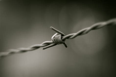 photo wire file barbed wire b w jpg wikimedia commons