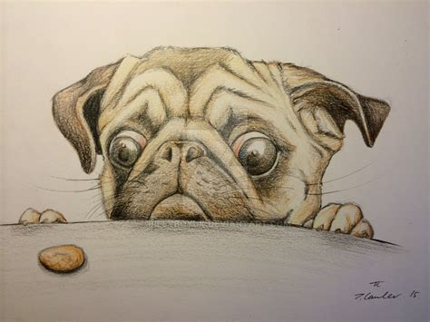 sketch of a pug pug pencil drawings breeds picture
