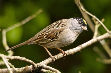 san benito bird species san benito county chamber of
