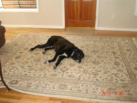 rug cleaning boulder co carpet cleaning boulder carpet vidalondon