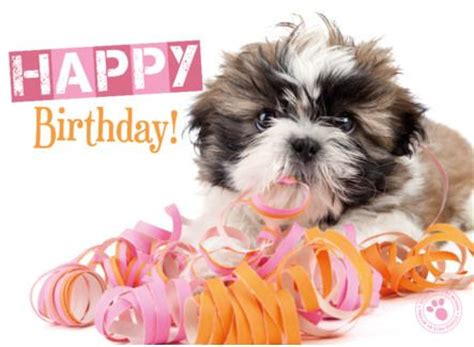 happy birthday shih tzu pictures 10 best images about birthday on happy to my best friend and make a wish
