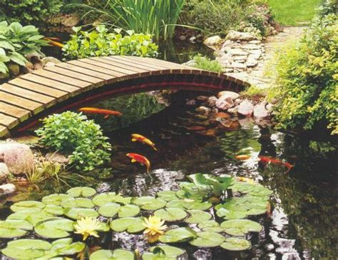 how to build fish ponds in your backyard how to make your own backyard fish pond free quality plr