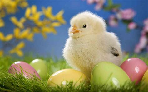cute rabbits and chicks april 2012 quot a fresh perspective quot