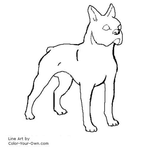 boston terrier coloring page boston terrier coloring page