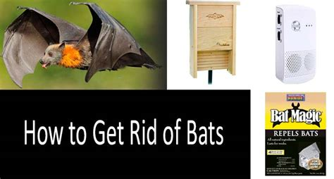 how do you get rid of bats in your backyard how to get rid of bats repellents and ways