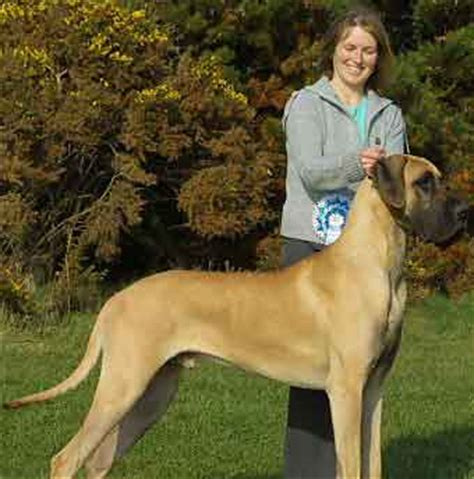 great dane puppies for sale in wisconsin user barry sanichar wikieducator
