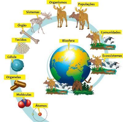 cadena alimenticia unam n 237 veis de organiza 231 227 o em ecologia biologia net