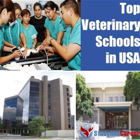 Top Mba Schools In Usa 2014 by The 50 Best Colleges In The United States Diy Study And