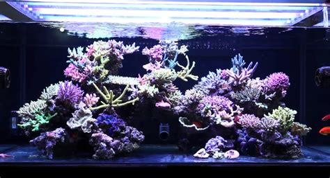 Aquascaping Live Rock Ideas Mad Hatter S Reef Saltwater Aquarium Care And Information