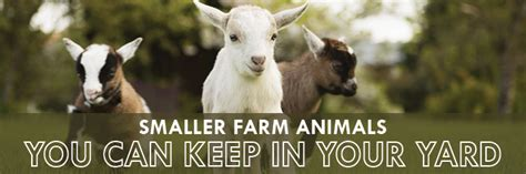 smaller farm animals you can keep in your yard