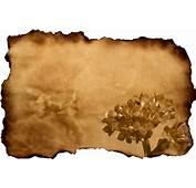 Free 吉尔的老旧纸与花 Stock Photo  FreeImagescom