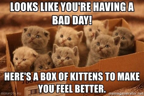 Having A Bad Day Meme - looks like you re having a bad day here s a box of kittens to make you feel better box of