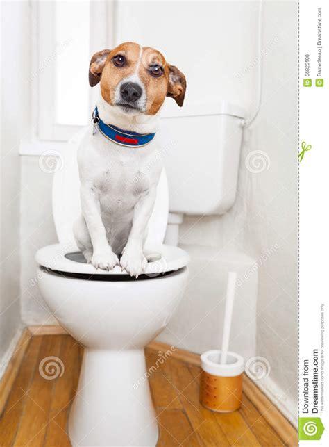puppy on on toilet seat stock photo image 56825100