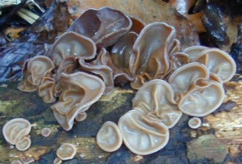 Penjual Lu Jamur macam macam jamur dan manfaatnya eky syuraika