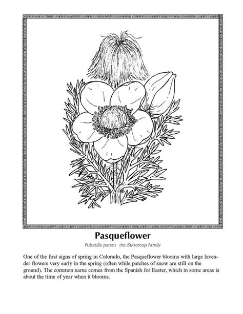 coloring pictures of wildflowers celebrating wildflowers coloring page