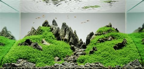 Style Aquascape by Planted Tank Aquascaping Freshwater Fish Fanatics