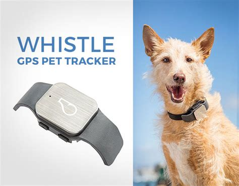 whistle tracker top 10 best tech gadgets of 2017 you would to buy