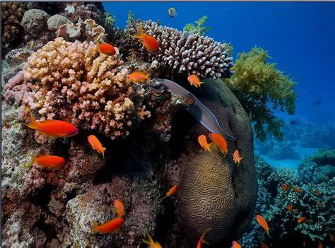 gambar pemandangan bawah laut 3 informasi