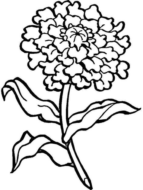 Carnation Coloring Page carnation flower coloring pages and print