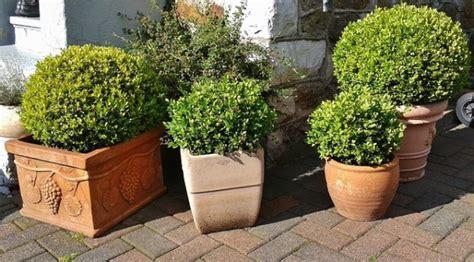 vasi di fiori in giardino i vasi da giardino per arredare con piante e fiori
