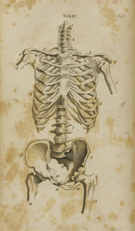 tavole anatomiche tavole anatomiche anatomiaartisticauno