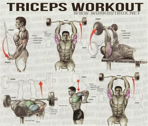triceps workout fitness