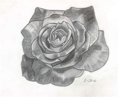 Drawing Roses by Sketches And Things