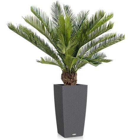 Plante Sans Entretien by Plante Exterieur Sans Entretien Cr Ation D 39 Un Jardin