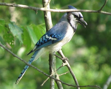 backyard birds of indiana pin by ann frederick on nature pinterest