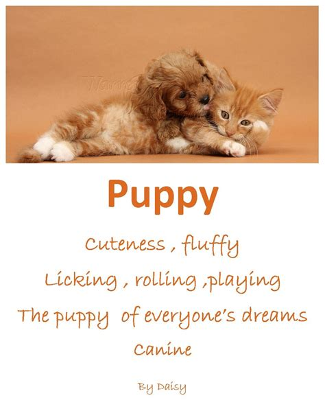 puppy poems my orange colour poem by class12class12