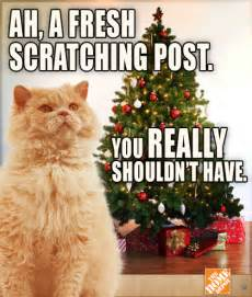 Cat Christmas Meme - christmas lol holiday meme trees cats nails lol cats